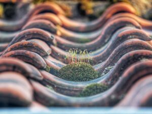 mossy-roof-tiles